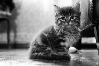 Little kitty by PetiteCreature