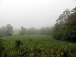 Fog in the Morning by mrcbax