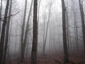 Fog in the Woods by mrcbax