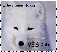 Love Snow Fox Stamp by Dragon-Stigmata