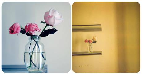 Digital vs. Polaroid by unda