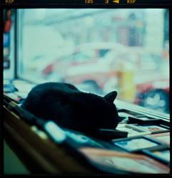 Cat by unda