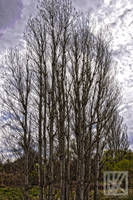 Just Trees . . . ? by kaioian
