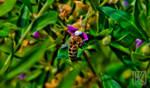 Honey Bee . . . ? by kaioian