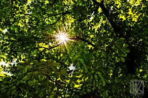 The Scorching Sun . . . ? by kaioian