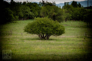 The Deciduous Tree . . . ? by kaioian