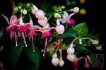 Fine Flower . . . ? by kaioian