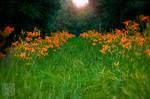 Thoroughfare of Flowers . . . ? by kaioian