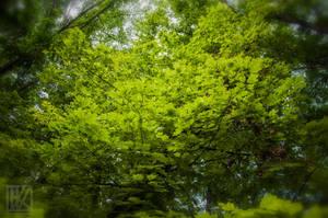 The Green Paradise . . . ? by kaioian