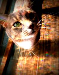 Gracie Lou Sparkletush by CrazedByCalliope