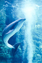 DOLPHIN MAYBE by EnkiLilstA8411
