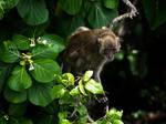 Monkey Island by InayatShah