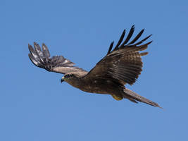 Soaring Kite - I by InayatShah