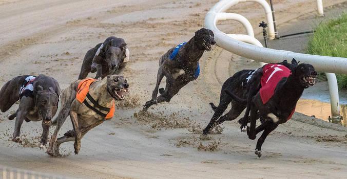Dog Race - IX by InayatShah