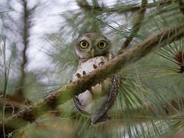 Big Owl Eyes by InayatShah