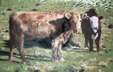 Boone Cows by gaelicgreen