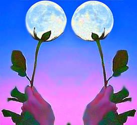 Moon Flowers by YOKOKY