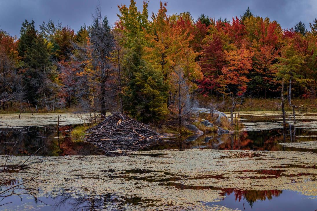 Beaver Lodge by AimeeDouglass
