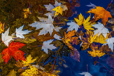 Upside Down Leaves by AimeeDouglass