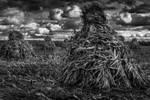 Stooked Corn by AimeeDouglass