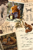 Vulpes Java by EosFoxx