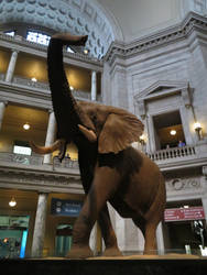 Smithsonian Natural History Museum: Rotunda Pic. 2 by TuxedoToad