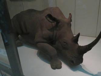 Smithsonian Museum: Mammal Hall: Black Rhinoceros by TuxedoToad