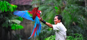 flying Green Winged Macaws by GregoriusSuhartoyo