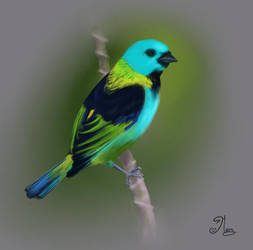 Green-headed Tanager by mary3m