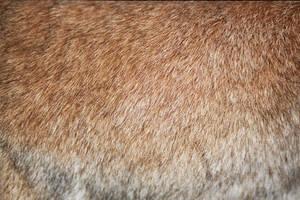 rabbit fur - ahv by zuzu-stock