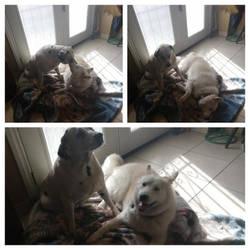 Nana and Spotty by KishiTheDragoness95