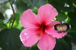 06-06-10 Butterfly Pavilion 3 by Nabikchan
