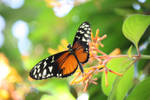 06-06-10 Butterfly Pavilion 4 by Nabikchan