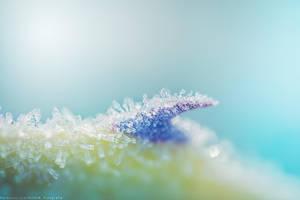 frozen peak by CliffWFotografie