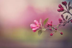 last blossom :( by CliffWFotografie