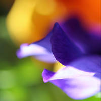First sun of sping II by EvasionK