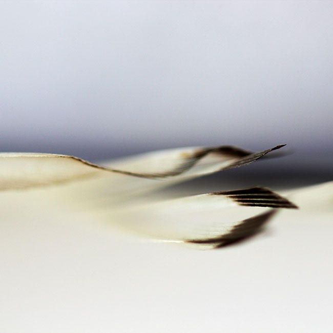 Abstract4 by EvasionK