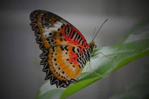 Un autre papillon by Icaros-must-die