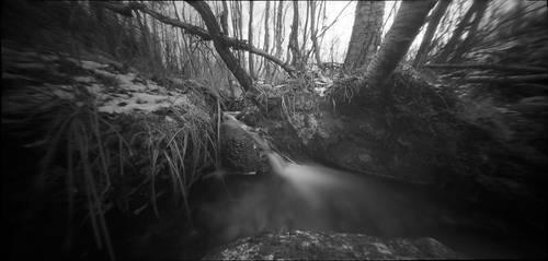 darkwood by Kosmur