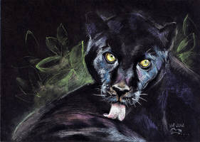 Black on black by VeronikaFrizz