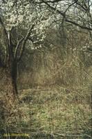 emptiness by sigurka
