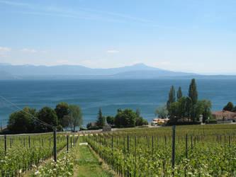 summer vines by peterburk