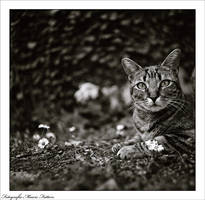 Cat - Gerom by dreamsofautumn