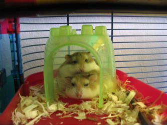 Stacked Hamsters by BethaLim