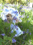 Bluebelle by Princess-Peachie