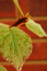 water on leaves by Yoghurt-Pot