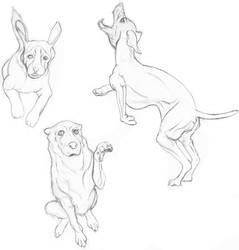 Dogs by Jormungundr