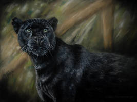 Panthera onca by lluvia-estival
