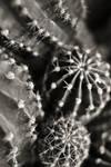 Cactus world by the-prozak