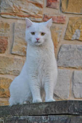 White Cat by cfry